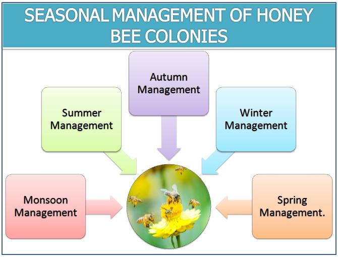 SEASONAL MANAGEMENT OF HONEY BEE COLONIES